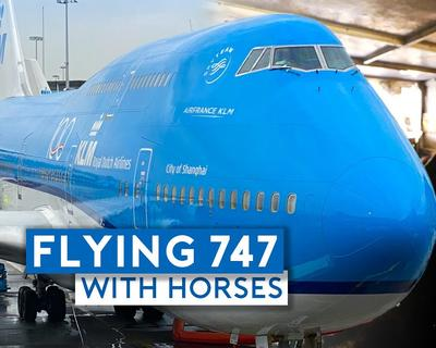 Sam Chui Travels with Horses on HIs Latest Flight with KLM
