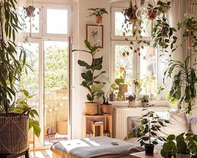 The rise of the 'Insta' Plant